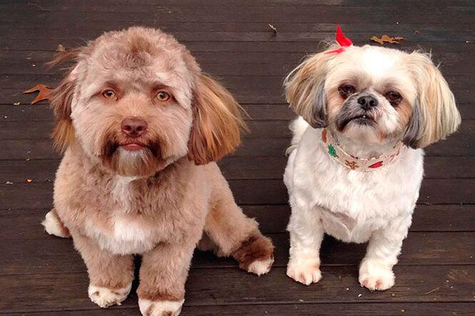 Вы только посмотрите! Необычный пёс стал «двойником» некоторых звёзд