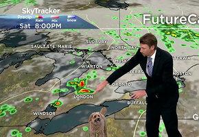 «А на юге страны у нас…»: собака смешно испортила выпуск прогноза погоды