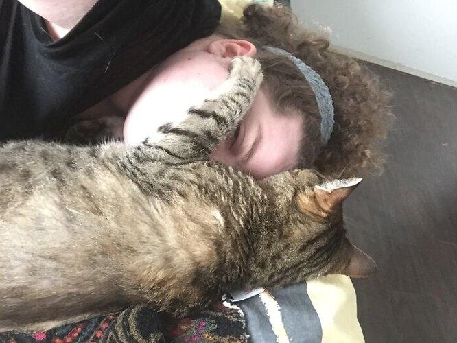 кот табби, серый кот, кот пенсионер