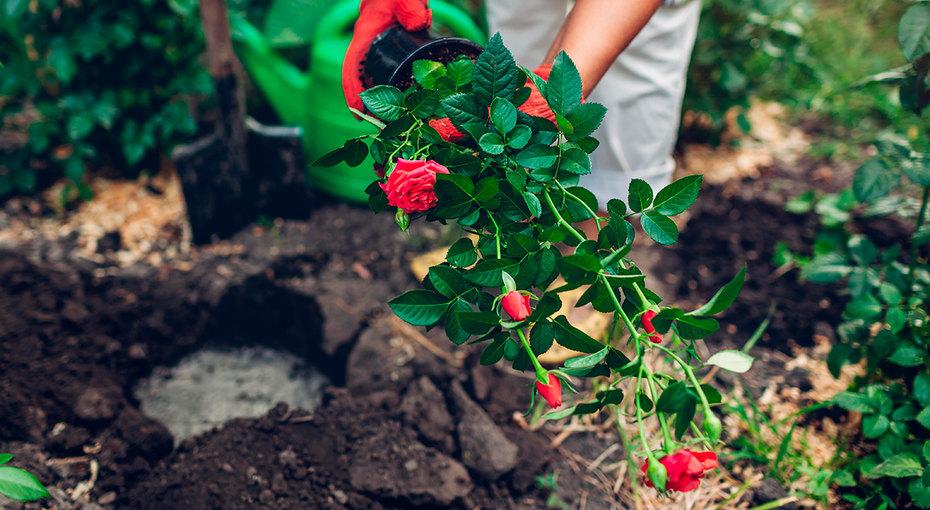 Сам себе агроном: как определить тип почвы научастке иулучшить ее плодородие?
