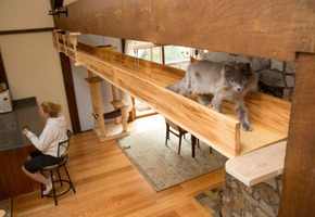 Кошачий рай. Как дизайнер сделала дом удобным для кошек