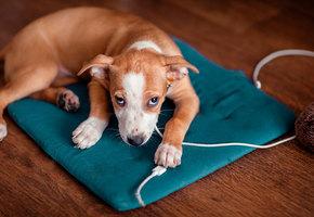 Как защитить провода — и еще 7 лайфхаков для владельцев собак