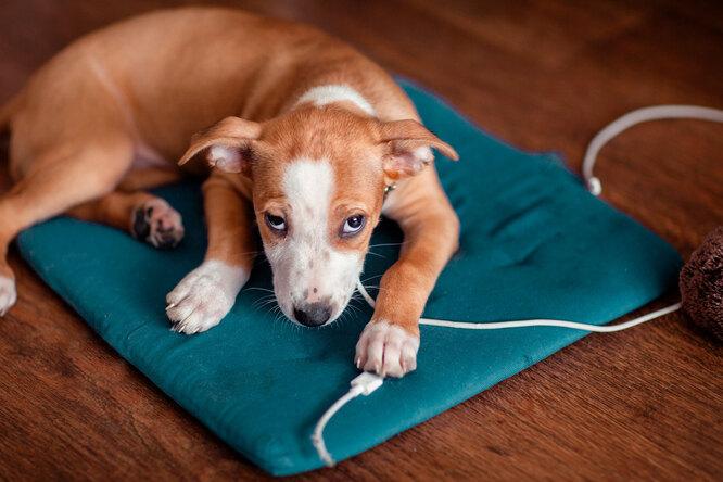 Как защитить провода — иеще 7 лайфхаков длявладельцев собак