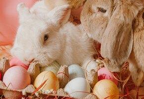 2021, перестань! Лучшим пасхальным кроликом в этом году стала лягушка
