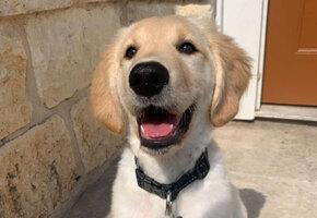 Девушка опубликовала фото щенка. А затем увидела пикантную подробность