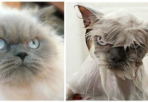 Забавные преображения. Как выглядят наши животные до мытья и сразу после него