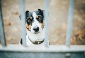 Самый грустный пёс в мире дни напролёт проводит на балконе в ожидании хозяина