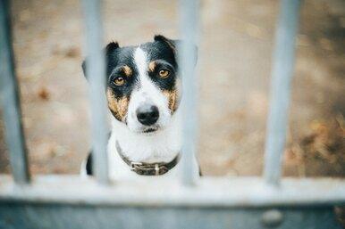 Самый грустный пёс вмире дни напролёт проводит набалконе вожидании хозяина