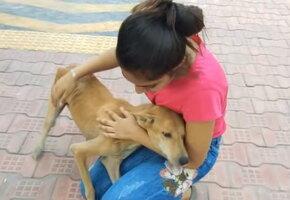 «Еле на лапах стояла»: активисты спасли истощенную собаку, кормившую 6 щенков