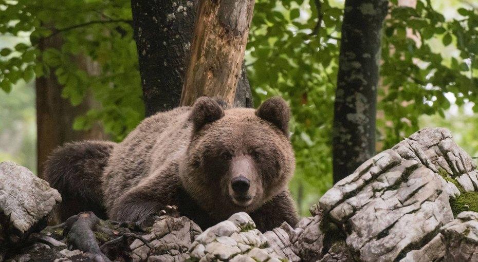 83-летняя пенсионерка больше суток простояла вручье, отпугивая медведя безоружия