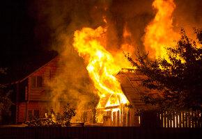 Больше чем чудо: «дикий» пожар сжег весь город, но обошел собаку и ее щенков