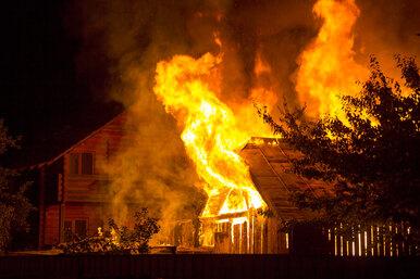 Больше чем чудо: «дикий» пожар сжег весь город, но обошел собаку иее щенков