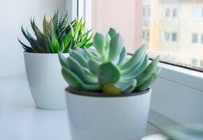 10 плюсов комнатных растений! Почему в квартире их должно быть много