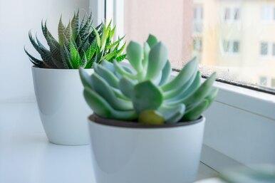 10 плюсов комнатных растений! Почему вквартире их должно быть много