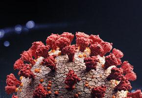 Коронавирус оказался уязвимым: ученые оценили риск заражения через поверхности