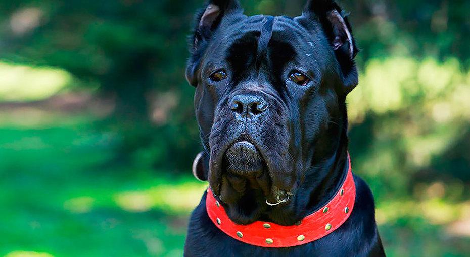 10 редких пород собак, окоторых вы точно ничего неслышали