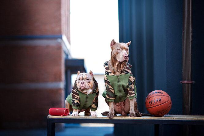 Худи для собаки, bananadog.ru,