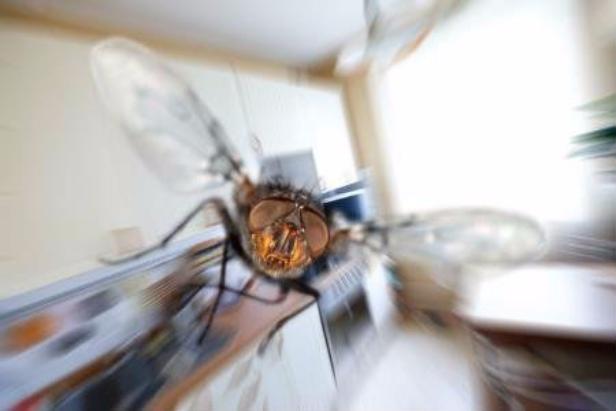 Варианты как избавиться от мух в доме квартире или на даче