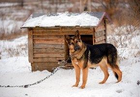 В Башкирии из собачьей будки украдено более миллиона рублей