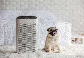 Дышать станет легче: что такое мойка воздуха и зачем она нужна?