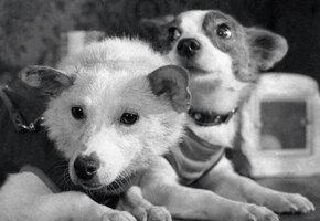 Самые известные собаки в истории науки