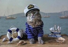 Обманули примету: на флоте служит кошка по кличке Собака