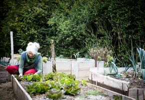 Как правильно посеять морковь, редис и свеклу, чтобы выросли крупными