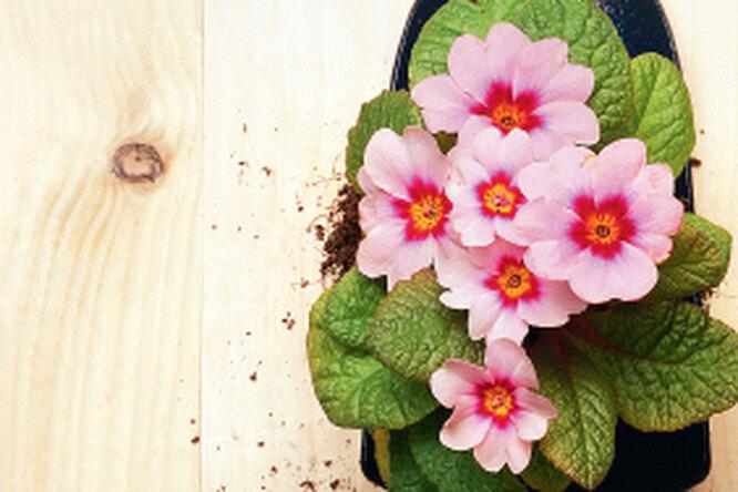 Неприхотливые цветы