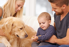 Бесценные моменты! Что ждет семью, у которой есть дети и собака