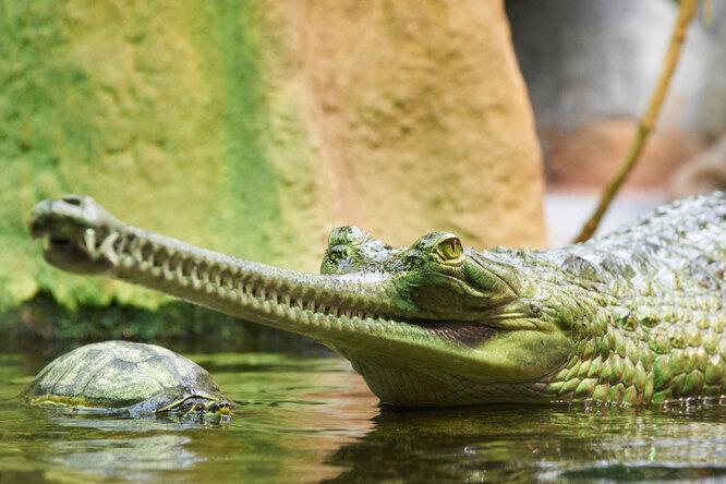 Фото папы-крокодила, катающего наспине 100 деток, покорило мир