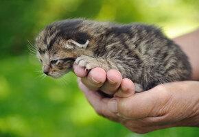 Люди собрали полмиллиона рублей, чтобы в доме престарелых появился котенок