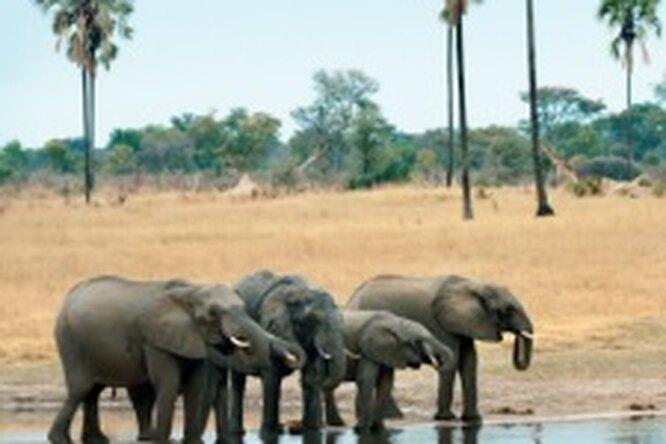Зимбабве иЗамбия. Африканское сафари