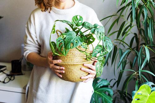 Аллергия, ожог, проблемы сдыханием: какие комнатные растения могут нас убить?