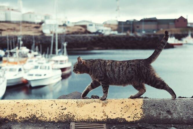 Кот стал почтальоном ипомог соседям познакомиться