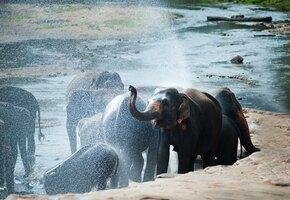 За ними следит весь мир! «Пьяные» слоны оббежали весь Китай и возвращаются домой
