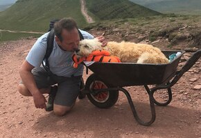 «Он уходил счастливым»: британец поднял пса с лейкемией на вершину горы