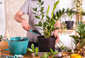 Больше не куплю: 6 растений с подоконника, которые раздражают цветоводов