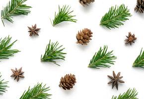 10 веских причин сохранить хвою от новогодней елки