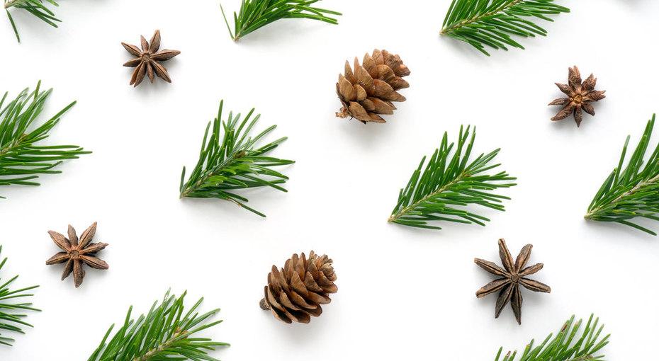 10 веских причин сохранить хвою отновогодней елки