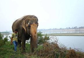 После 46 лет жизни в неволе слепая слониха оказалась на свободе