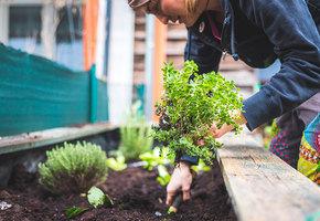 Органические удобрения своими руками: как их приготовить (опилки, сорняки и другое)