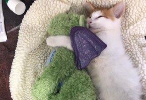 Настоящий друг: игрушечный дракон помог котенку не бояться лечения