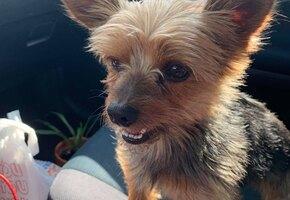 У 73-летнего вдовца украли собаку из машины на парковке. Пса отыскали благодаря соцсетям