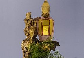 Редкая нота. Что такое нишевая парфюмерия и кому она подходит?