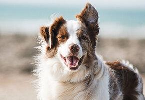 Не просто слова: вот что происходит с собаками, если сказать «Я тебя люблю»
