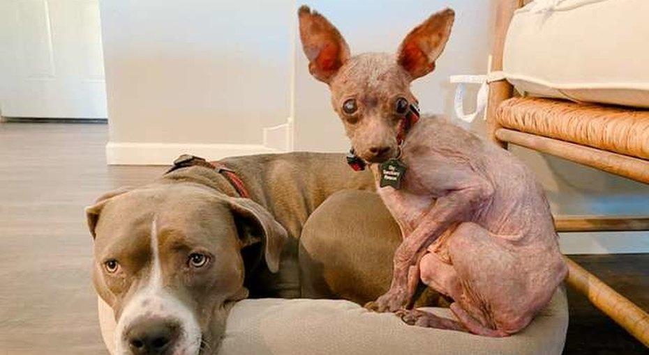 Брошенный щенок был похож намумию. Любовь изабота преобразили его