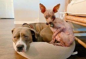 Брошенный щенок был похож на мумию. Любовь и забота преобразили его