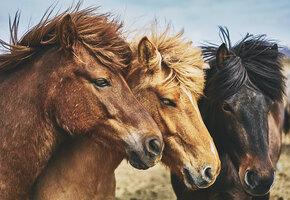 Как мило! Трехлетняя малышка спела колыбельную для лошадей