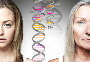 Гены пальцем не размажешь: кто в ответе за голливудскую улыбку и пышную грудь