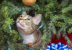 Новый год для животных: растения, которые приносят вред собакам и кошкам